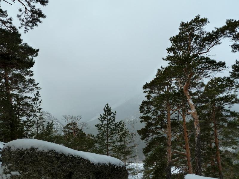 20111119. Боровое. Прогулка в снегопад. Между Боровым и Большим Чебачим озёрами.