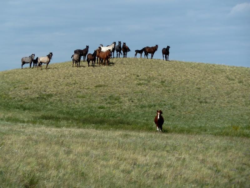20120507. Окраинами мелкосопочника: между горами Тасшокы и Топлак.