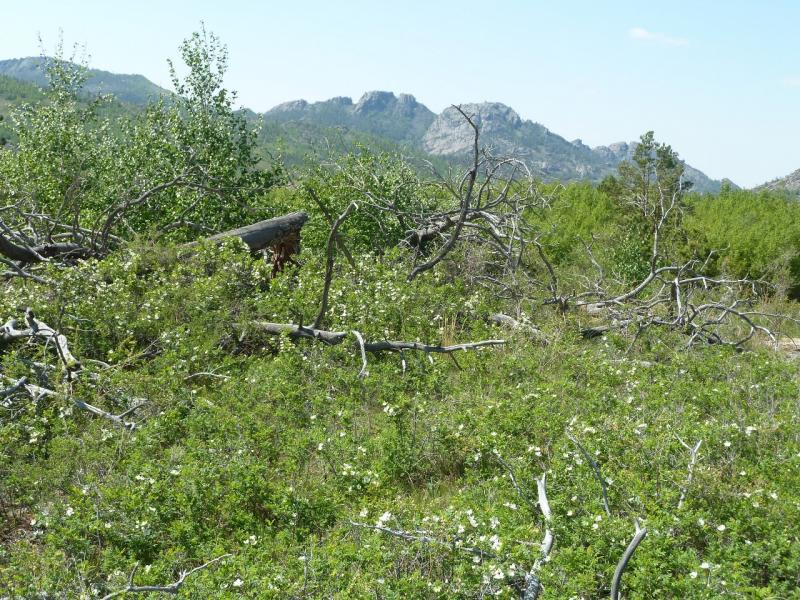 20120509. Ущельями Баянаула: валежник в юго-восточной части долины Жамбак.