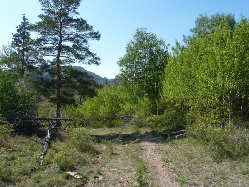 20120509. Ущельями Баянаула: дорога лесников в юго-восточной части долины Жамбак.