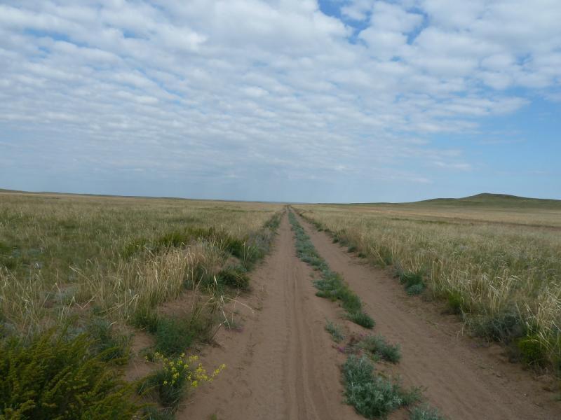 20120511. Курчатов: песчаная дорога в окрестностях села Кызылкудук.