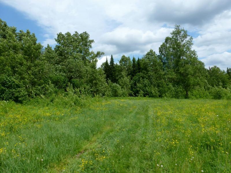 20180620. Дорожка через урочище Пограничное, за северными пригородами Кемерово.