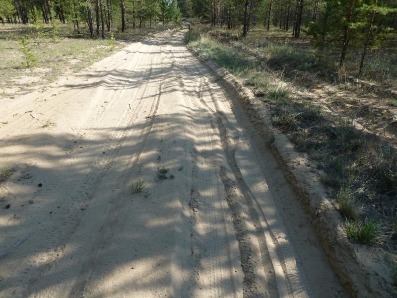 20120512. Из Курчатова к соснам: в сосновом бору дороги песчаные и для велосипедиста весьма трудно-проходимые.