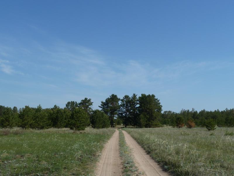 20120513. Сосновыми борами ВКО: дорога между сосновыми борами.