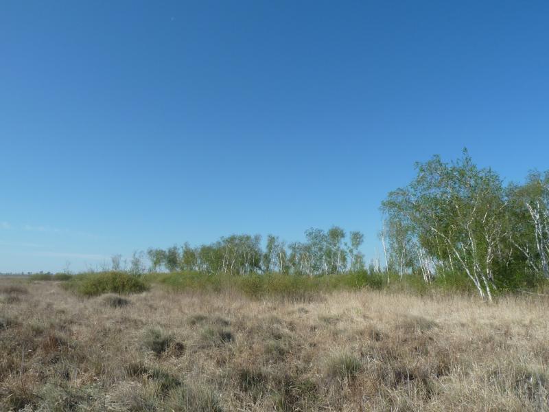 20120514. На Майкарагай: у озера Шошкалы, на границе Восточно-Казахстанской и Павлодарской областей.