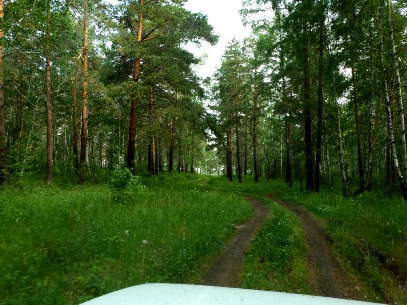20180622. На дороге через сосновый бор у Ангары.
