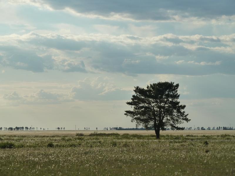 20120515. Шалдайскими борами: низина у дороги Садыгащы-Сугур.