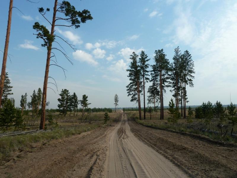 20120516. Краем Щербактинского района: лесная дорога совмещённая с противопожарной полосой перед селом Сугур.