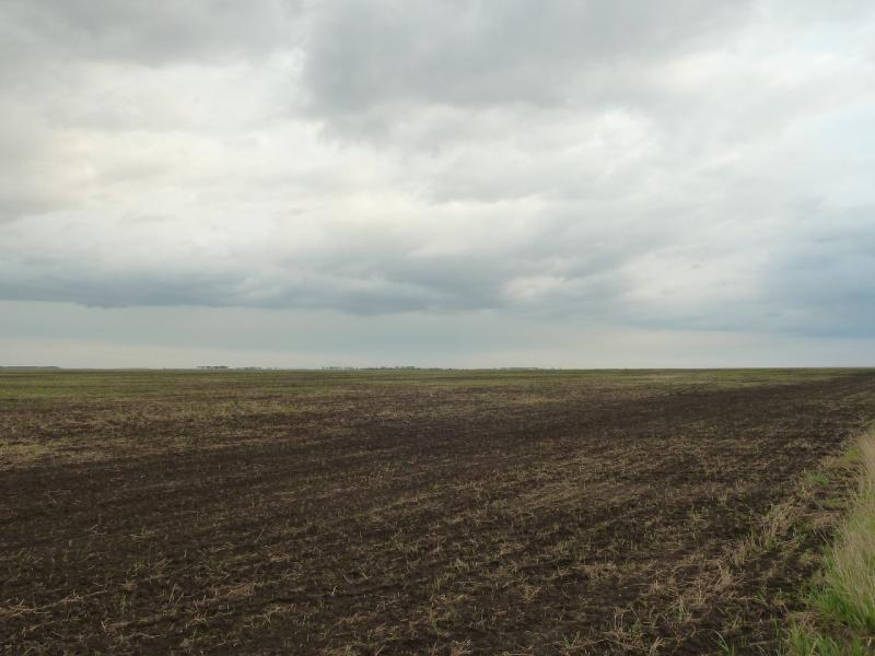 """20120518. Успенскими окраинами: """"рубикомовские"""" поля на северо-востоке Успенской области."""