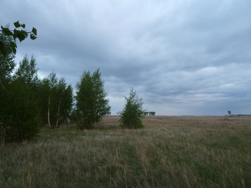 20120518. Успенскими окраинами: берёзовая роща неподалеку от урочища Карасук.