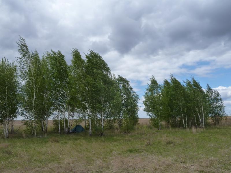 20120520. Огибая урочище Карасук: место стоянки в берёзовой роще.