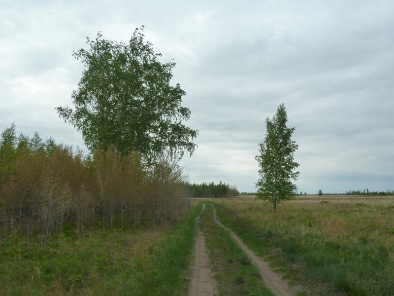 20120520. Границей на северо-запад: дорога мимо берёзовой рощи у села Тигистик.