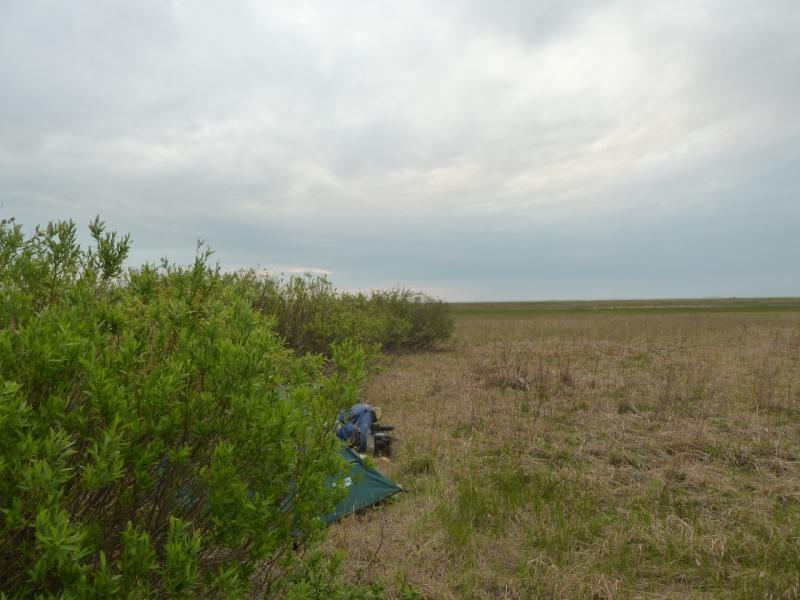 20120521. Пограничными местами: место стоянки в кустарнике, в низине между двух солёных озёр.