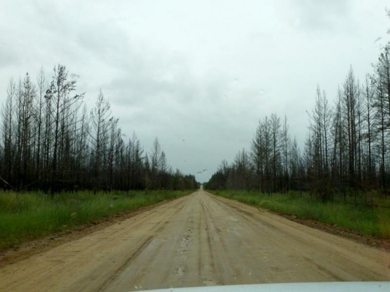 20180625. Грунтовкая дорога через прогоревшие сосновые леса между сёлами Сахули и Алла.