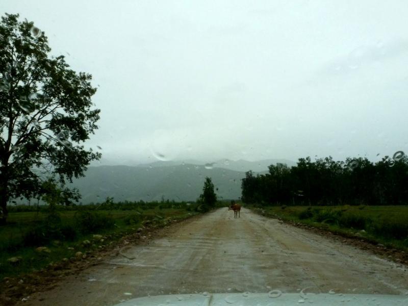20180625. На дороге между сёлами Улунхан и Кучигер.