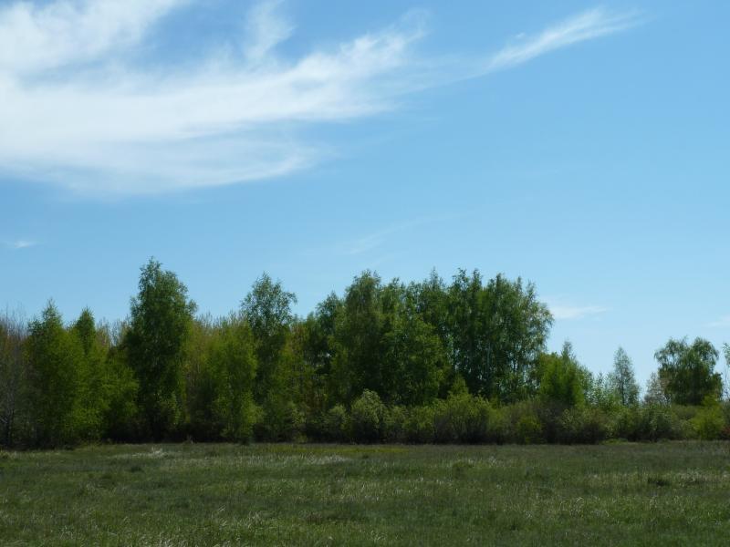 20120522. Сухопутным полуостровом: берёзовый лесок неподалеку от Озёрного.