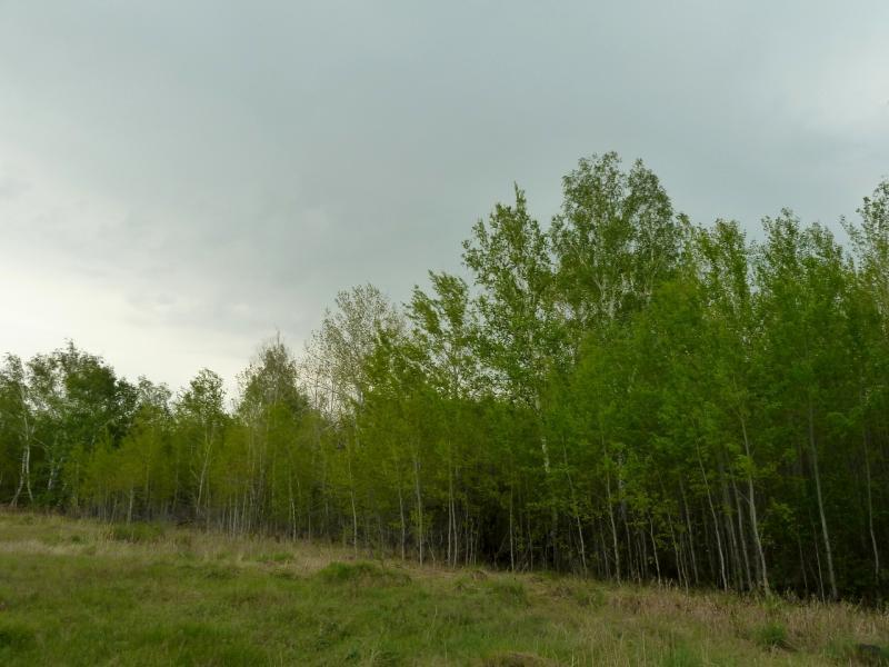 20120523. Железинскими грейдерами: на поляне берёзовой рощи неподалеку от Алаколя.