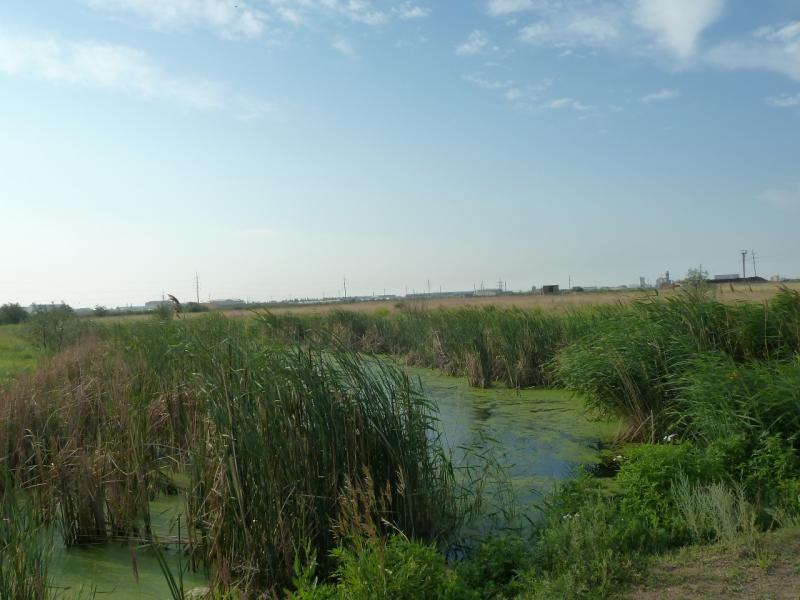 20120629. КТЛ-Астана: вялотекущий ручей в окрестностях Астаны.
