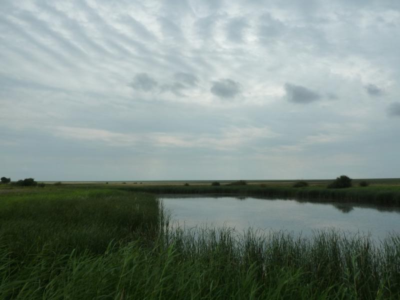 20120630. Баймен-2012: болотина Кустомар.