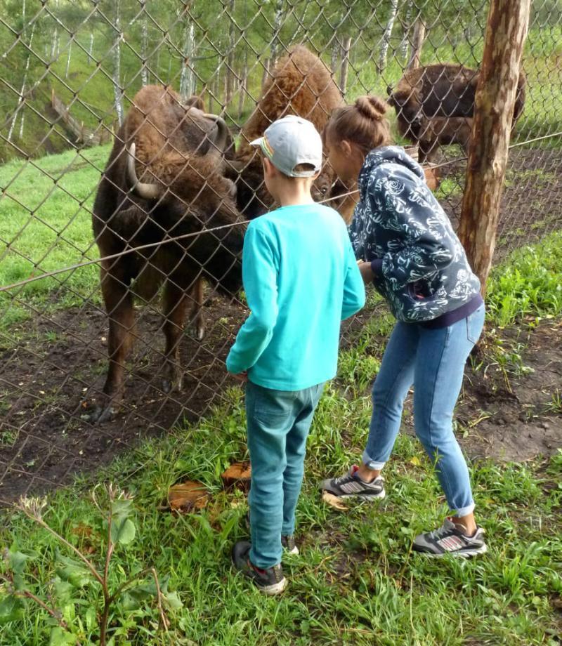 20180805. Дети кормят зубров яблоками, в чергинском питомнике.