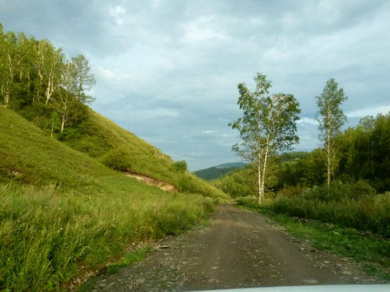 20180805. Грунтовая дорога к зубровому питомнику, вдоль речушки Актёл.