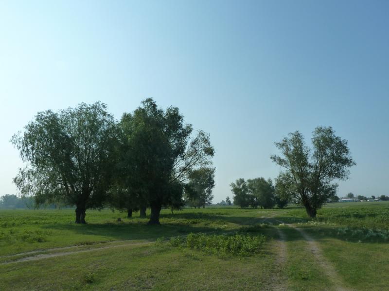 20120715. Павлодар-Аксу: дорога между сёлами Айдаколь и Потанино.
