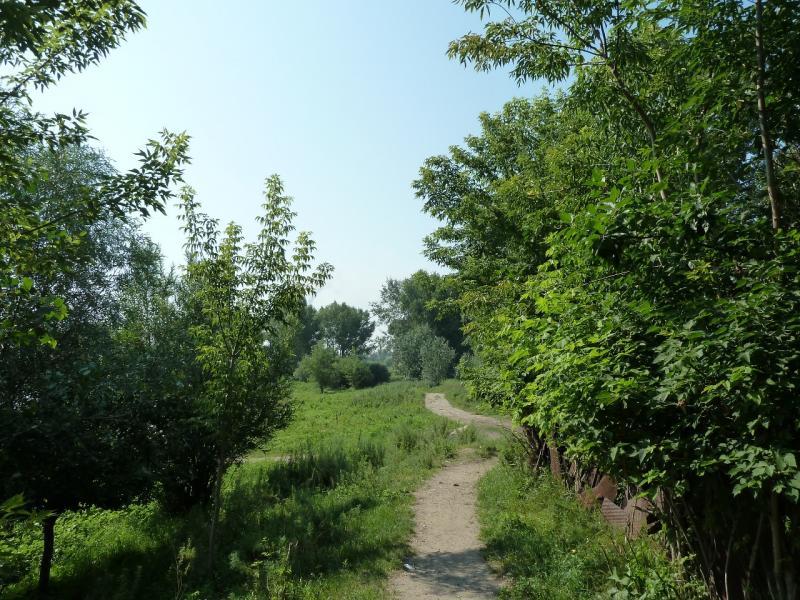 20120715. Павлодар-Аксу: тропа вдоль протоки у посёлка Аксу.