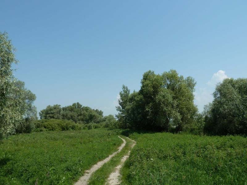 20120715. Аксу-Павлодар: колея вдоль Иртыша у Аксу.