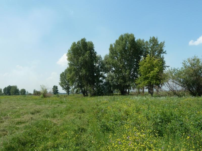 20120715. Аксу-Павлодар: дорога постепенно растворилась в зарослях.