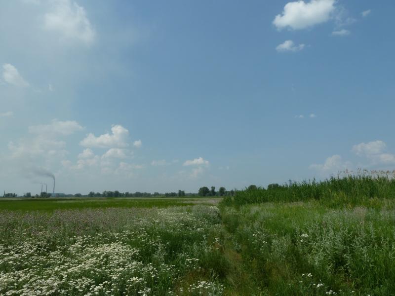 20120715. Аксу-Павлодар: заросшая зеленью низинка в пойме у Аксусской ГРЭС.