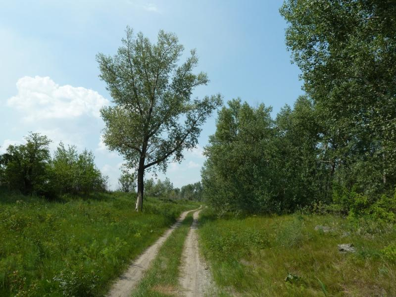 20120715. Аксу-Павлодар: дорога вдоль канала Аксусской ГРЭС.