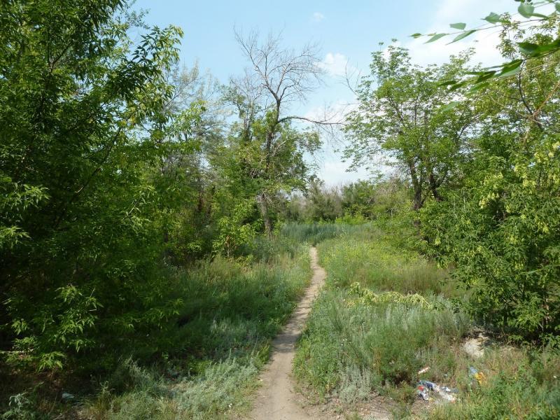 20120715. Аксу-Павлодар: тропа захламленного парка посёлка Аксу.