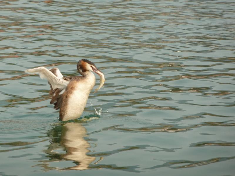 20120725. Рыбалка на озере Джасыбай.