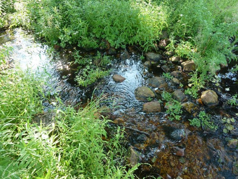20120804. Ручей у ЛЭП, пересекающей горы Ерейментау.