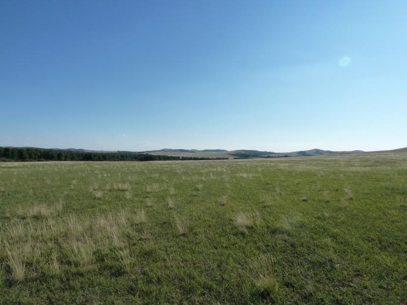 20120805. Странно ровная долина, покрытая странно мелкой и чахлой растительностью.