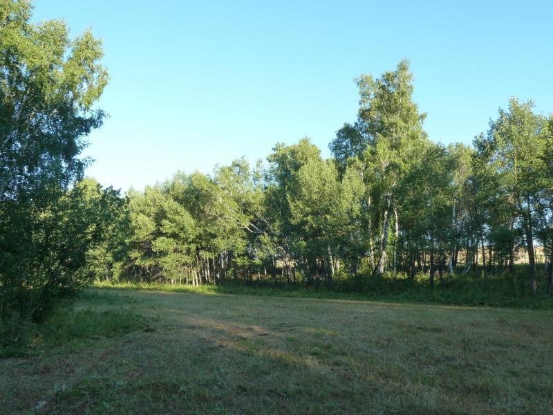 20120806. На опушке берёзовой рощи рядом с селом Ленинское.