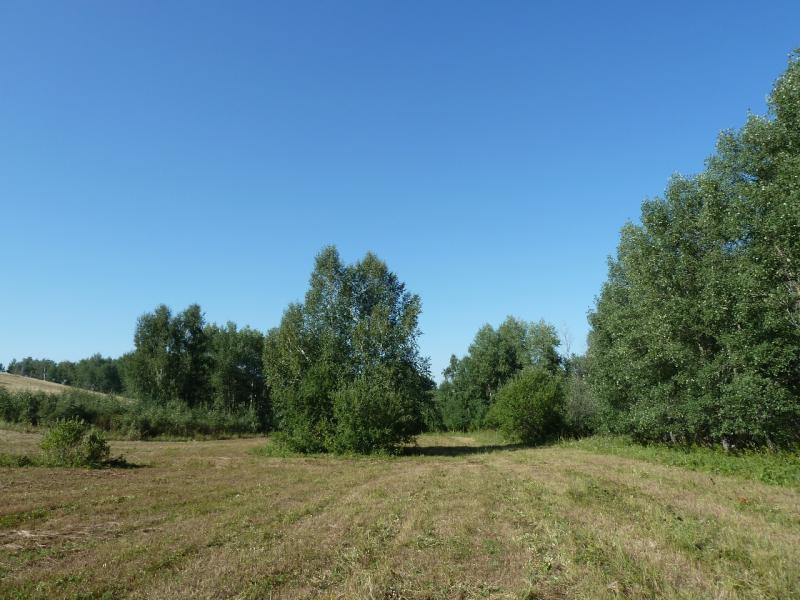 20120806. Сенокосная дорога на склоне горы у посёлка Ленинский.