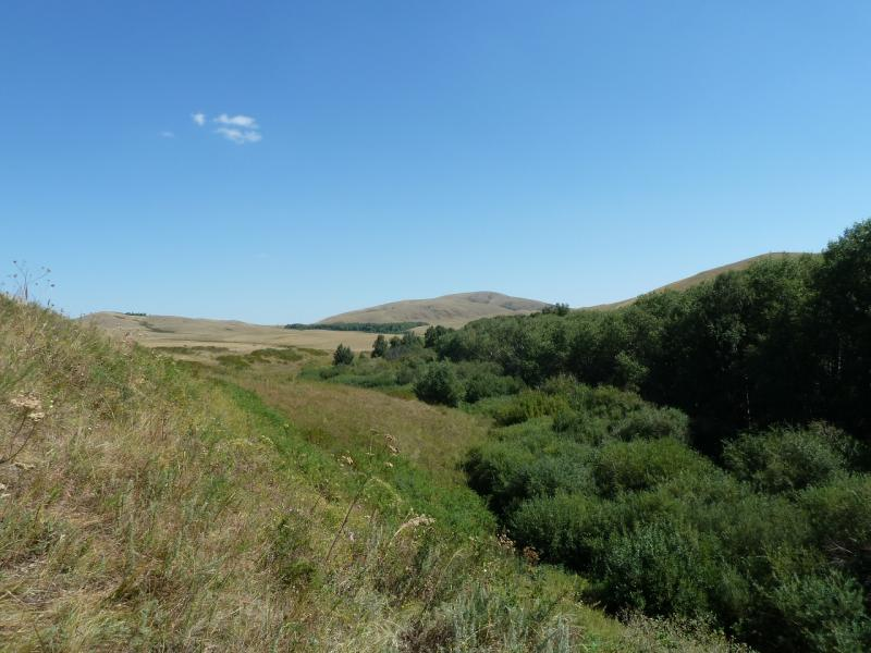 20120806. Ущелье, прогрызенное речкой Каратал, неподалеку от одноимённого села.