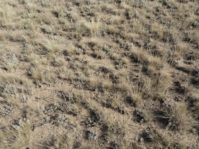 20120808. Пример растительности в долине солёного озера Шыбынды.