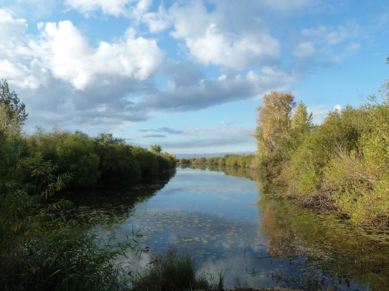 20120923. В пойме Иртыша, протока около села Кенжеколь.