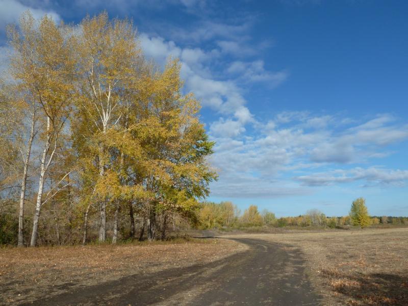20120923. В пойме Иртыша, дорога около села Кенжеколь.