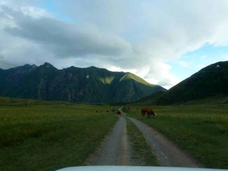 20180813. На небольшом плато у реки Катунь, за селом Инегень.