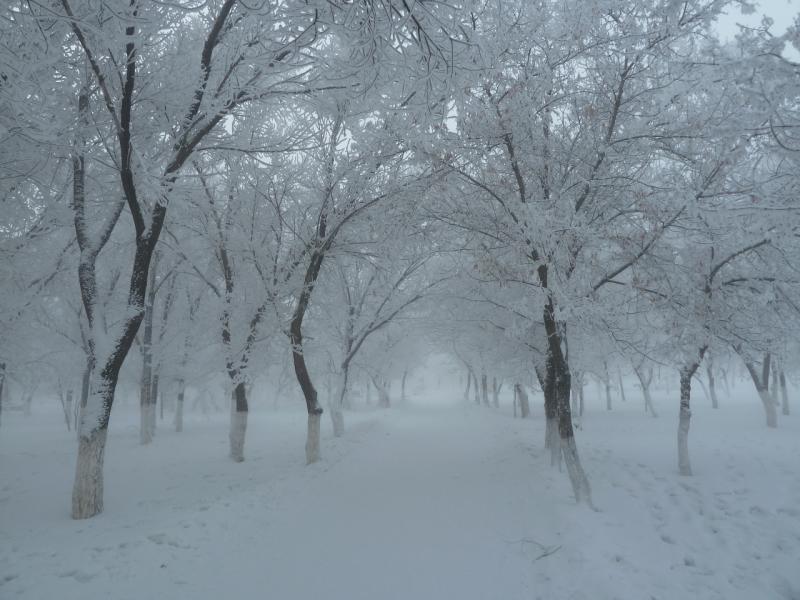 20121216. Декабрьский сорокаградусный Павлодар. В парке у моего дома.