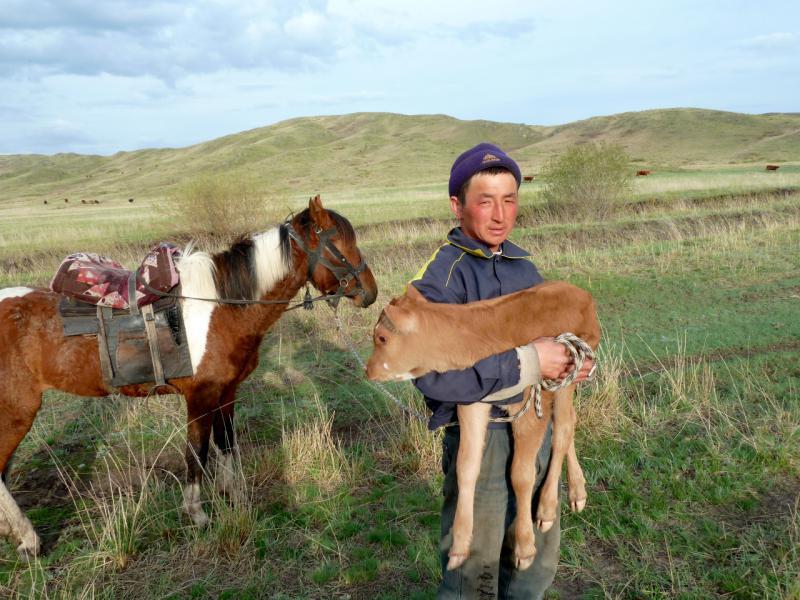 20130426. Пастух села Шоптыколь, с новорождённым телёнком на руках.