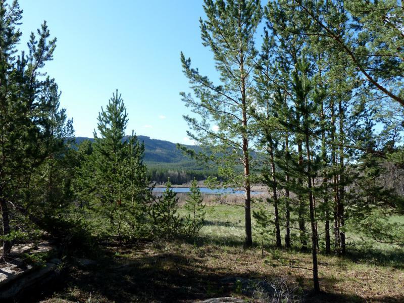 20130501. Вид из сосняка на озеро в Каркаралинском заповеднике.