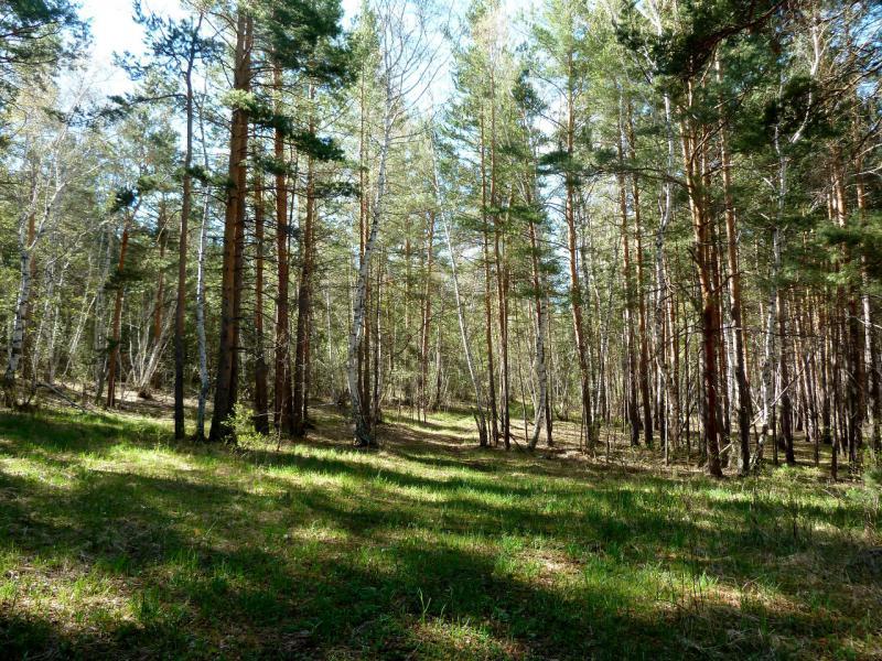 20130501. В лесу Каркаралинского заповедника.