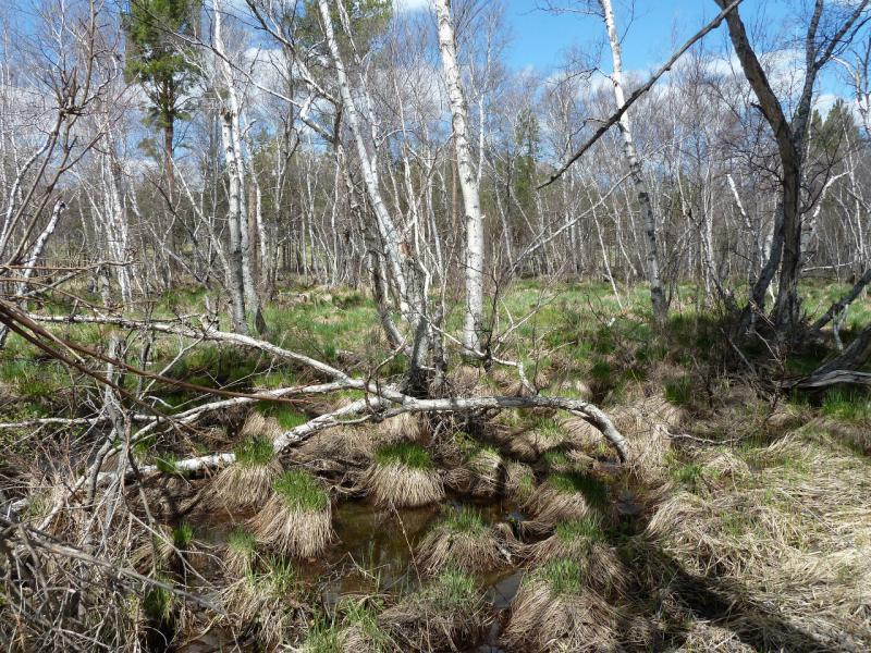 20130501. Подтопленные берега речки Кендара в Каркаралинском заповеднике.