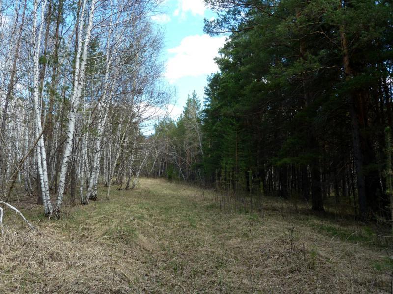 20130501. Просека в лесу в Каркаралинском заповеднике.