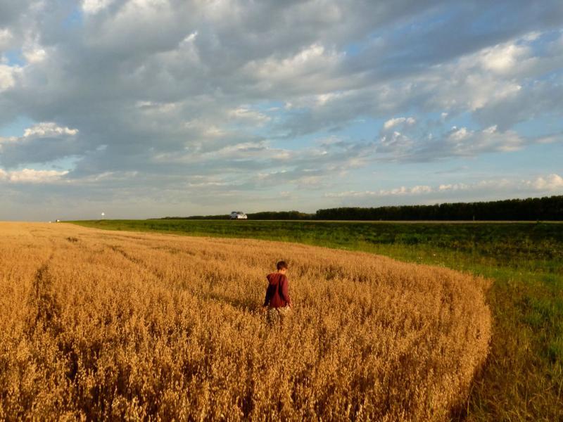 20180817. В поле недалеко от Новосибирска.