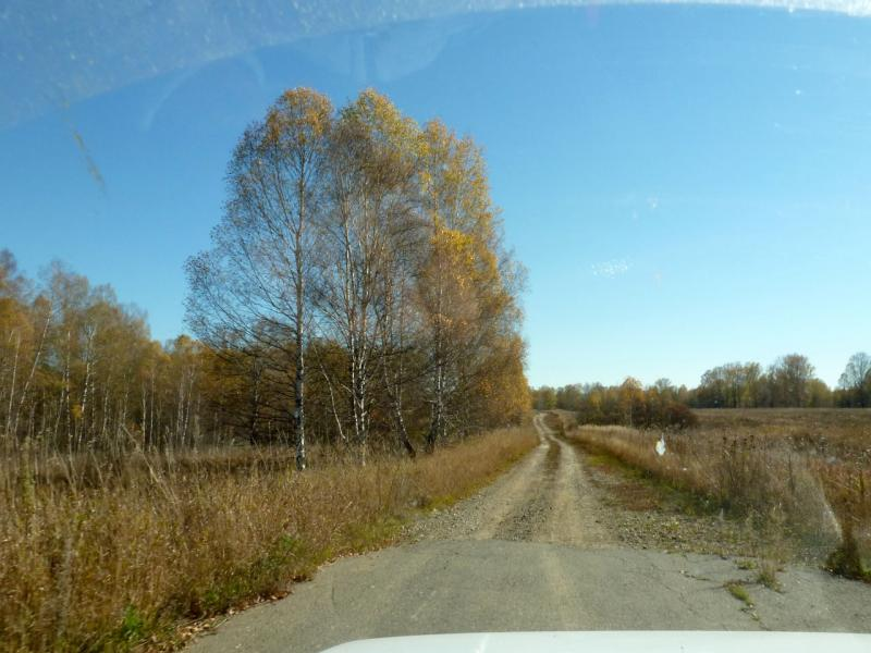 20181006. На своротке к запруде речки Суенга, недалеко от места её слияния с речкой Кинтереп.